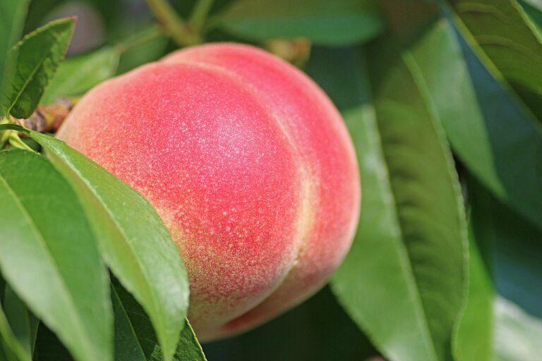 peach-2721852_1280